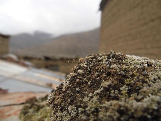 Ocaña, Ayacucho, Perú Close-up Day Macro Macro Photography Musgo Nature No People Outdoors Rural