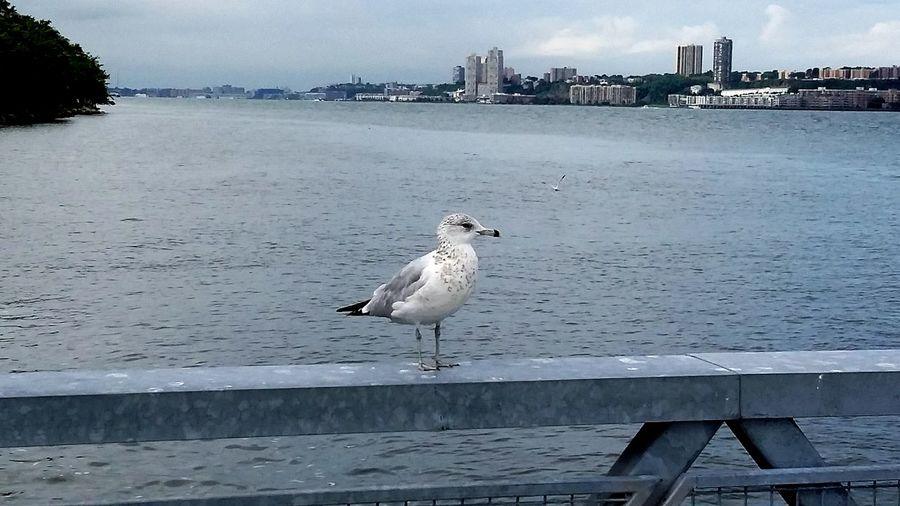 Harlem Riverr Park nyc looking into New Jersey Seagulls ocean view