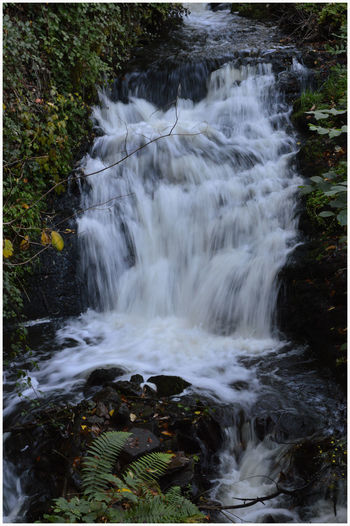 Speed Motion Ferns Rocks Energy The Burn Tree Fungus Weathered Growth Nature Full Frame Outdoors Kirriemuir Town Centre Rural Scene The Den Beauty In Nature Countryside Life Plant Light And Shade Freshness Fragility Leaf water Rocks