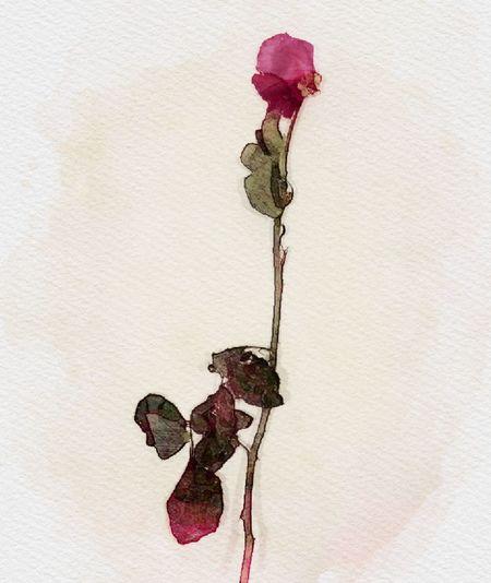 major missing you 😫😫!! MyBestie Mybeardman ❤️❤️❤️💋💋💋💋❤️❤️❤️ Mystoryof23 Phatudumbo Missyoueveryday Asshole🚷 Dontyoumissme?? Love You A Lot❤️❤️ Flower We Gave Each Other EyeEmNewHere
