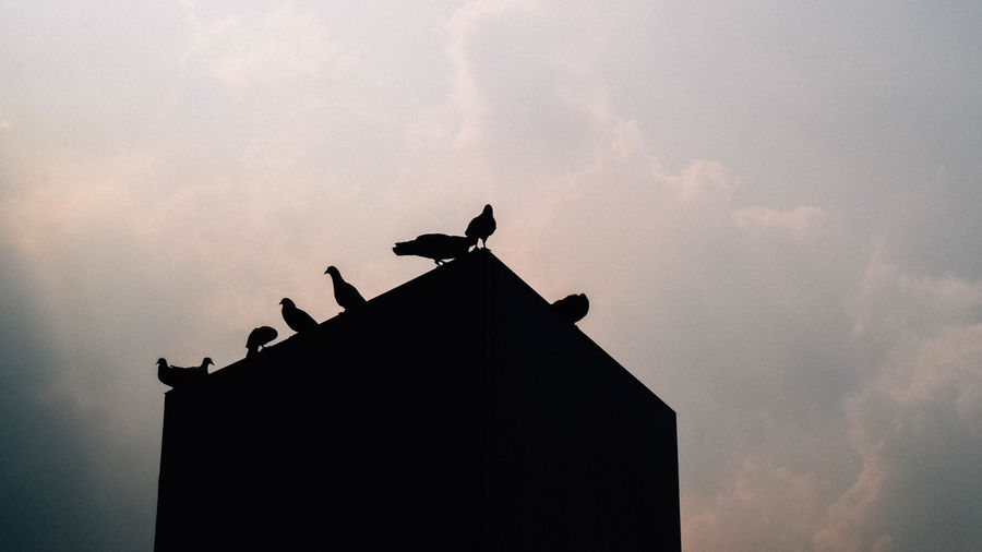 Low angle view of silhouette bird perching on building against sky