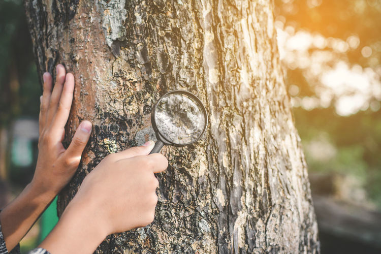 Cropped hands of person holding magnifying glass by tree in forest