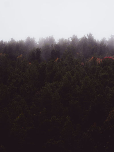 Trees in forest against sky