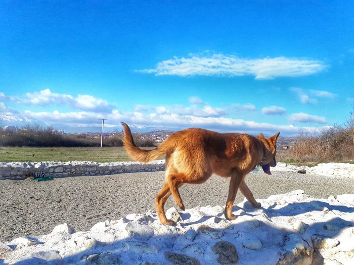 Horse standing on field against sky during winter
