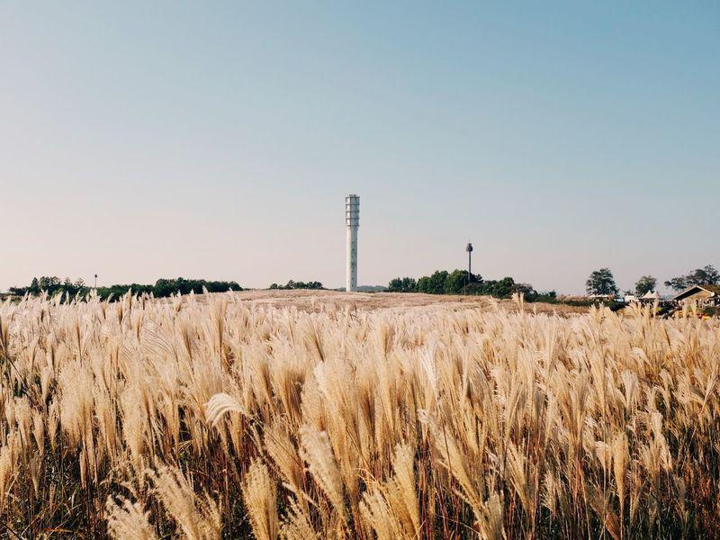 VSCO Vscocam Silver Grass
