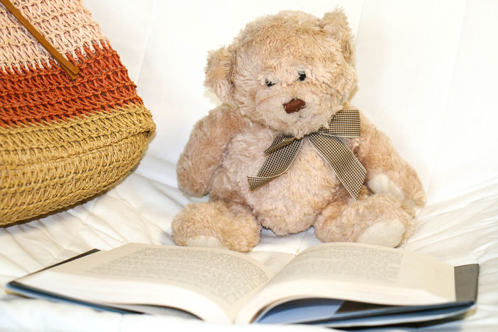 Book Childhood Close-up Day Indoors  Mammal No People Sitting Stuffed Toy Teddy Bear Toy