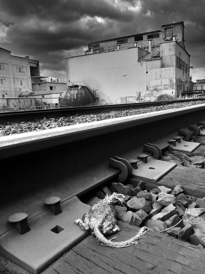 Abandoned Places Architecture Sky Building Exterior Built Structure Black And White EyeEm Exploring Abandonded Building Factory Metal Rusty Run-down Industry Backgrounds Old Mill  Outdoors Damaged Abandoned Railroad Track Cloud - Sky Landscape Dead Rat Traintracks Scenics
