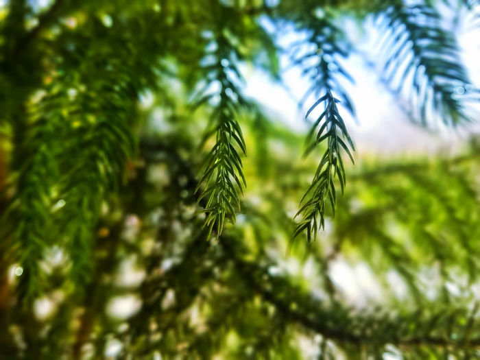 Backgrounds Beauty In Nature Branch Check This Out Close-up Day Green Color Growth Nature No People Samsung Galaxy S7 Tranquility Tree