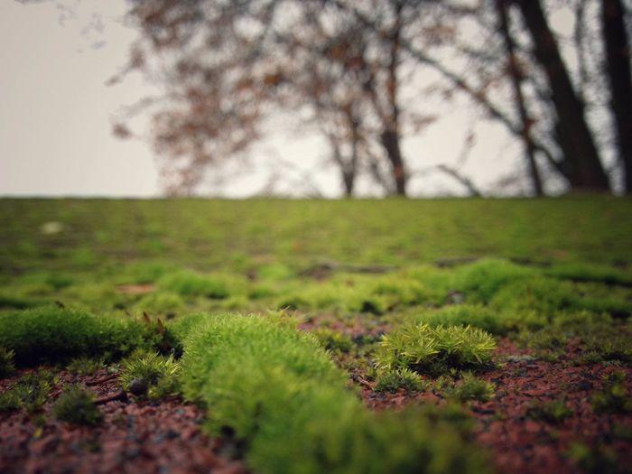 Autmn Colors Autumn Depth Of Field Green Green Green Color Moss Mossporn Outdoors Rainy Moss IPSWeather