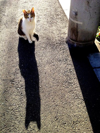 Animal Themes Domestic Animals One Animal Pets Mammal Domestic Cat Shadow Feline Cat Sunlight Outdoors Standing Day No People Low Section