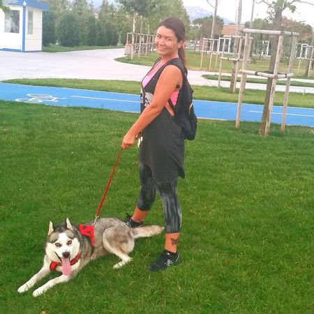 Husky Love Husky ♡ Siberian Husky Walkingtime Istanbul Turkey