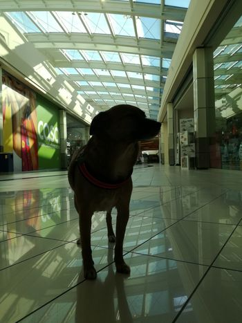 Dog Pets One Animal Indoors  Animal Themes Shopping Mall Light And Shadow Riflessi Riflection Cane Animal Friends Amore