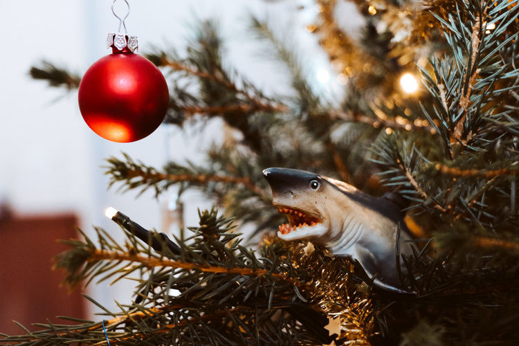 An unusual decoration for our Christmas tree Shark Christmas Christmas Decoration christmas tree Christmas Lights Comedy Christmas Ornament Celebration Animal Themes Plant Bauble Funny Decoration Tree Holiday Moments EyeEmNewHere