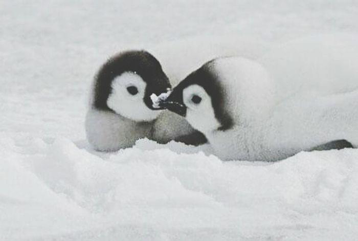 Cute Animals Beautiful Love Peguin