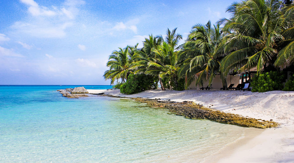 Idyllic beach on the maledives Indian Ocean Palms Relaxing Romantic Tranquility Tropical Paradise Beach Blue Destination Idyllic Malediven  Maledives Nature No People Palm Tree Relaxation Rest Sand Scenics Sea Sky Tranquility Tropical Vacations Water