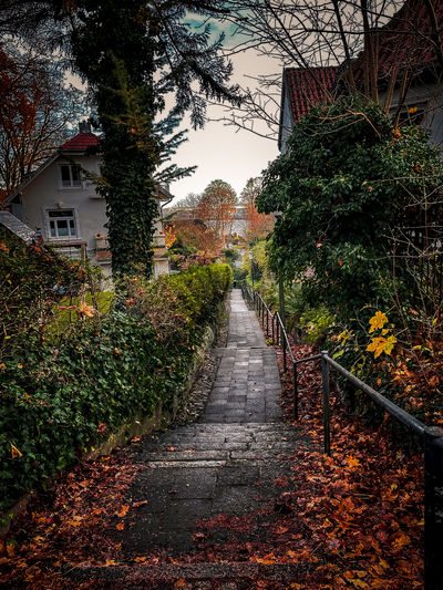 Footpath amidst trees and houses during autumn