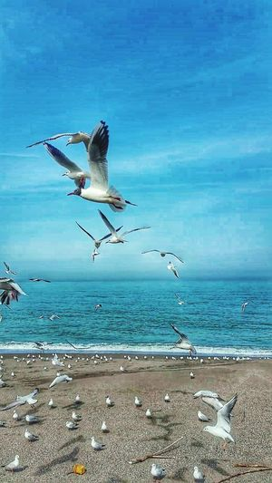 Bird Water Flying Sea Beach Spread Wings Sand Blue Seagull Sea Life
