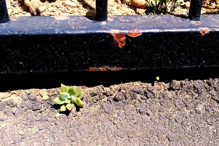 Escape! Escape Leaf Day Outdoors No People Plant Sunlight Nature Shadow Close-up Struggle For Life Struggle EyeEmNewHere Growth