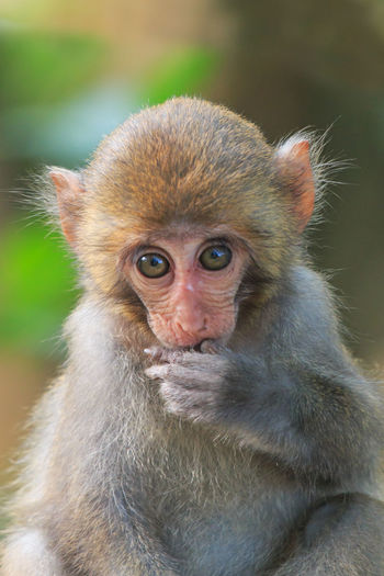 Close-Up Of A Baby Monkey