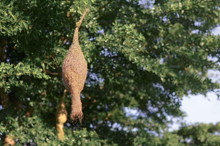 Low angle view of giraffe hanging on tree