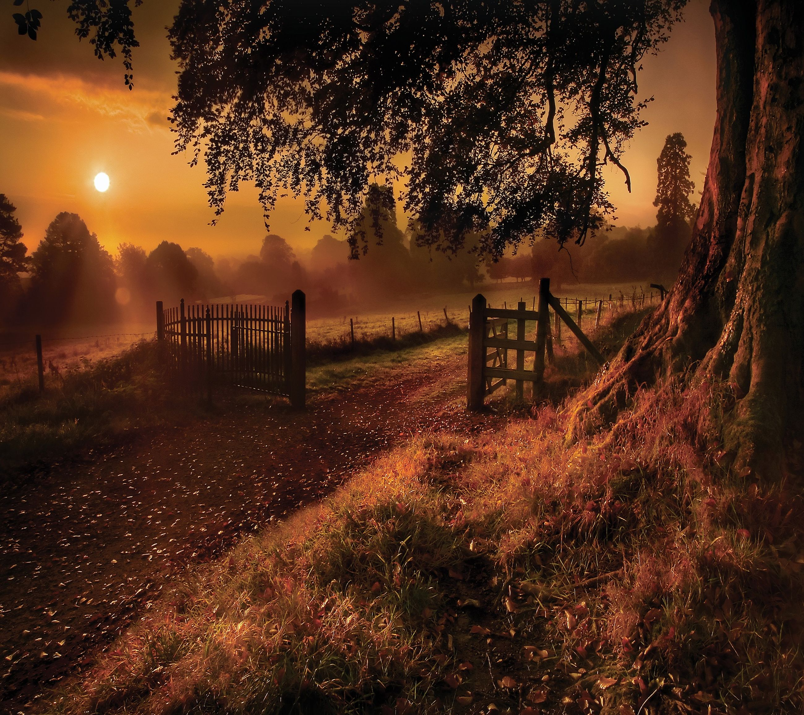 sunset, fence, tree, nature, silhouette, sky, outdoors, beauty in nature, no people, tranquility, fog, landscape, sun
