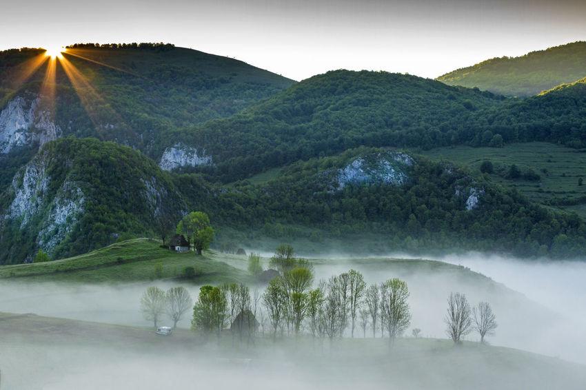 foggy morning in Apuseni Mountains Light Travel Trees Fog Landscape Mist Mountains Outdoors Springtime Sunrise Sunset