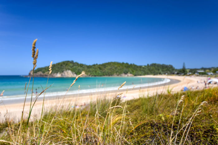 Beautiful wide angle view of Matapouri Beach near Whangarei on the North Island of New Zealand. Grass in the foreground. The close by Mermaid rock pools make it a popular tourist destination. Beach Life Beach Photography Grass Matapouri Bay Nature New Zealand Scenery Summertime Sunny Travel Travel Photography Beach Beauty In Nature Grassland Matapouri Mermaid Pools Nature_collection New Zealand North Island Ocean Pacific Ocean Sand Summer Tourism Travel Destinations Whangarei
