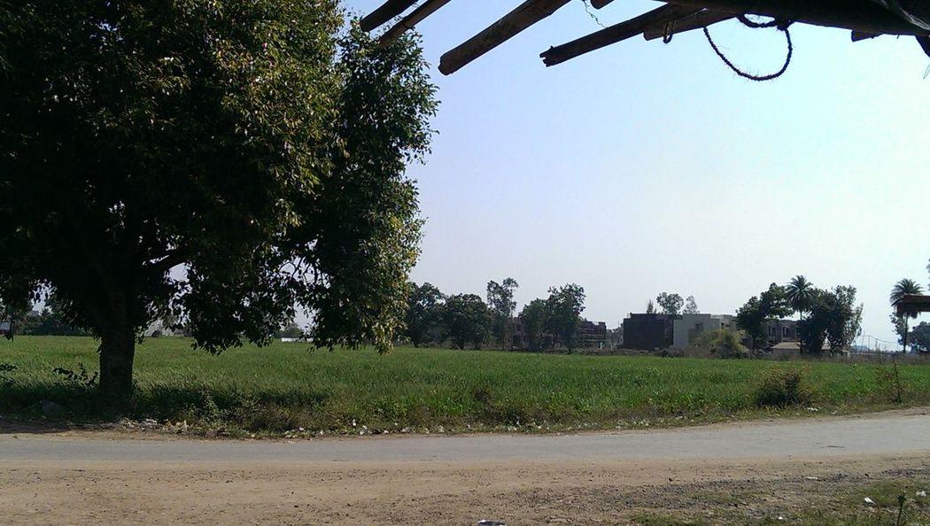 Beautiful Nature Bhopal Crops Farm Farms Fields Fieldscape Greenry India Landscape Palm Tree Scenery Sun