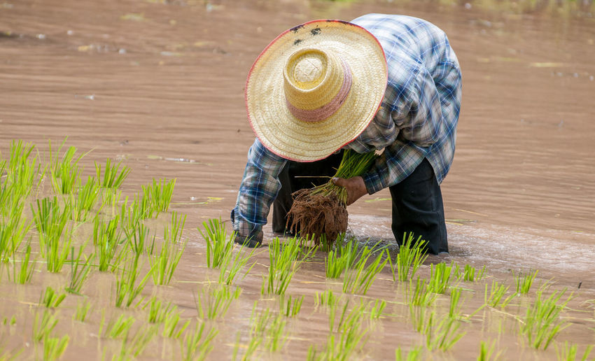 Agriculture Day