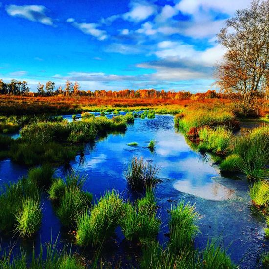 Spaziergang im Moor. Beauty In Nature Water Reflection Sky Scenics Blue Tranquil Scene Outdoors Grass Wilderness Area Landscape Tranquility No People Moodygrams
