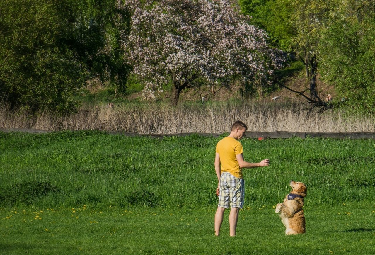 child, grass, childhood, full length, tree, standing, boys, nature, elementary age, day, field, one animal, outdoors, growth, green color, one person, children only, one boy only, pets, dog, rural scene, males, people, adult