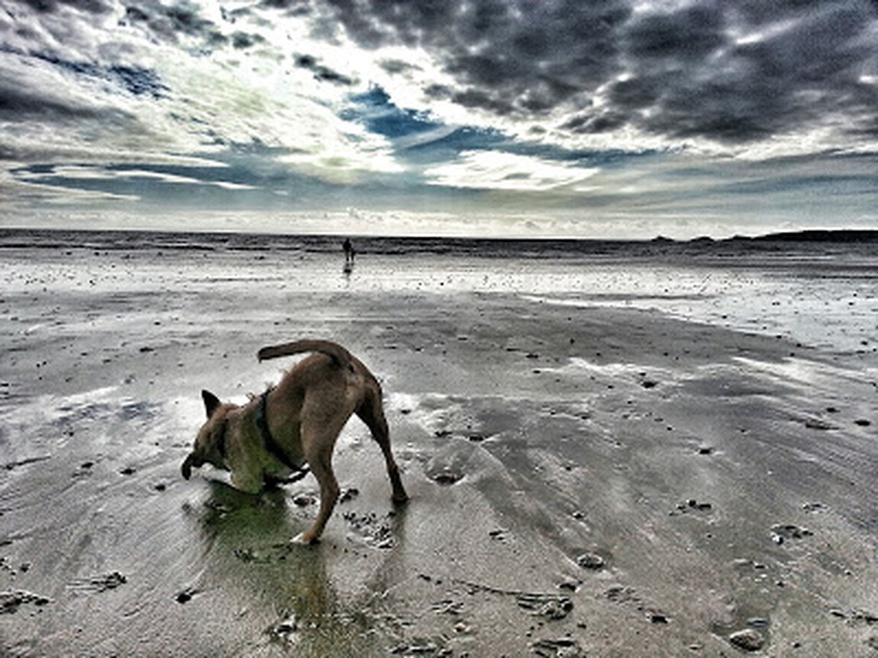 dog, beach, pets, cloud - sky, animal themes, domestic animals, sand, one animal, sea, outdoors, nature, sky, mammal, no people, day, water, beauty in nature, scenics, horizon over water