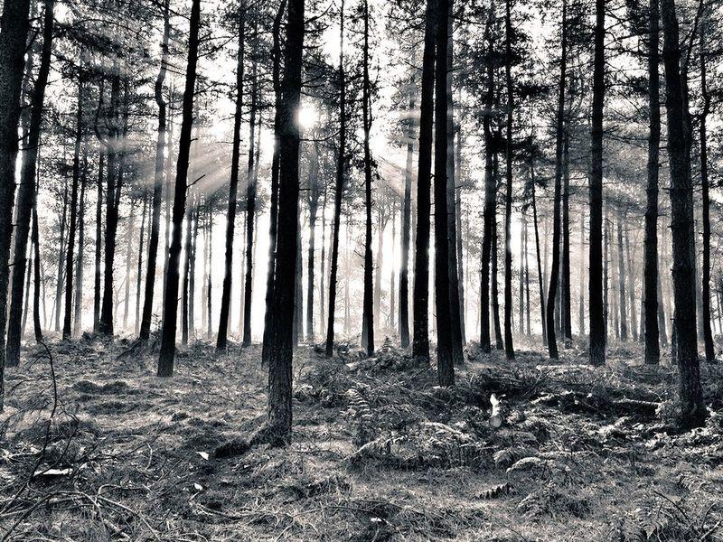 Blackandwhite Nature Sun