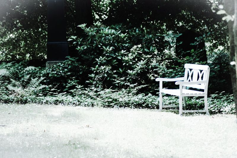...one with the nature... Natural Rural Scene Loneliness Lost Places Nature Bench Cemetery Sitting Landscape In Front Melancholy Melancholic Landscapes Green Thoughts Right Copy Space Background Idyllic Scenery Idyllic White Bench White Memories Memories ❤ Life Death Silence Emptiness Meditation Place Free Seat Woods