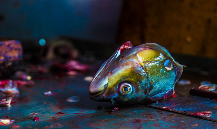 Cooking Animal Animal Themes Animal Wildlife Animals In The Wild Blue Close-up Fish Fishhead Focus On Foreground Food And Drink Indoors  Marine Multi Colored No People One Animal Still Life Streetfood Swimming Table Transparent Vertebrate Water The Street Photographer - 2018 EyeEm Awards The Portraitist - 2018 EyeEm Awards The Still Life Photographer - 2018 EyeEm Awards