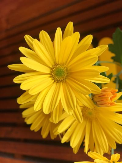 Flores en otoño , hermoso color que da vida a la terraza Flower Flowering Plant Yellow Freshness Petal Plant Flower Head