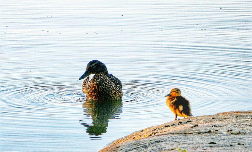 Bird Rocks And Water Littoisten Järvi Think Positive Close-up Beauty In Nature Sunlight Wildlife Outdoors