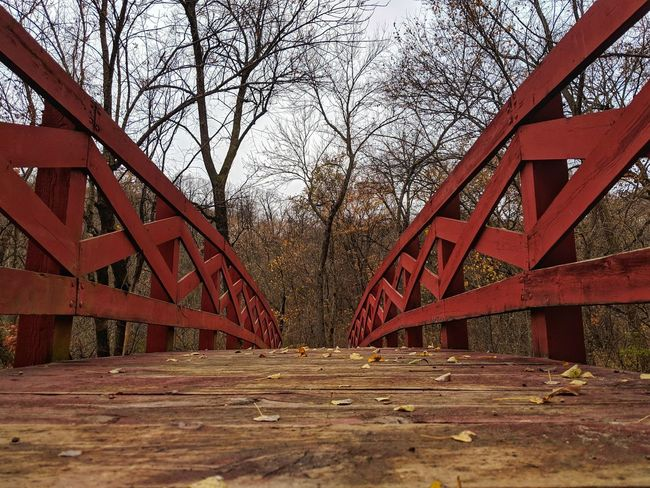 Autumn Fall Leaves Tree Red Bridge - Man Made Structure Underneath Architecture Sky Built Structure Bridge Footbridge Arched Arch Bridge Arch Engineering Empty Road