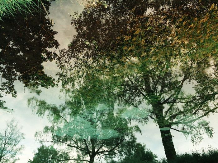 Watch the tree upside down Mexturesapp EyeEmSwiss EyeEm Nature Lover Streamzoofamily Trees Treegasm Water Reflections Nature_collection