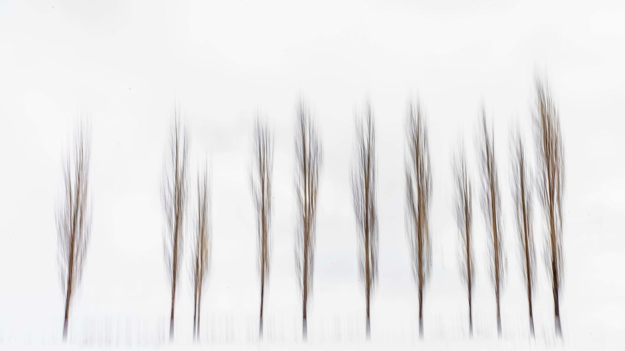 CLOSE-UP OF STALKS OVER WHITE BACKGROUND