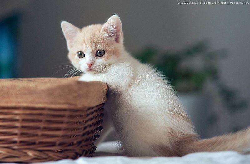 Miau *-*