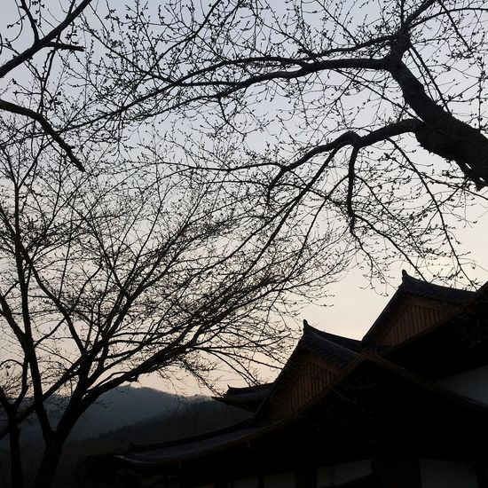 Sillhouttes And Sky Branches And Sky Branches And Shadow Korean Traditional Architecture Historical Building Sunset Natureandbuilding Naturephotography Magical Adventurer Lifeisbeautiful Lines Enjoying Life