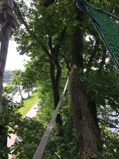 Hanging Out Klettern Bäume Spaß Am Leben  Sport