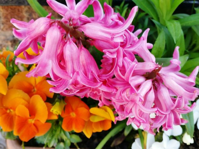 Splash of Colour Orange Color Green Color Pink Color Hyacinth Pansy Wildlife & Nature Beauty In Nature Outdoors Nature EyeEmSelect Plants EyeEm Selects Flower Head Flower Peony  Pink Color Petal Close-up Plant Stamen In Bloom Pale Pink Pollen Botany Blooming