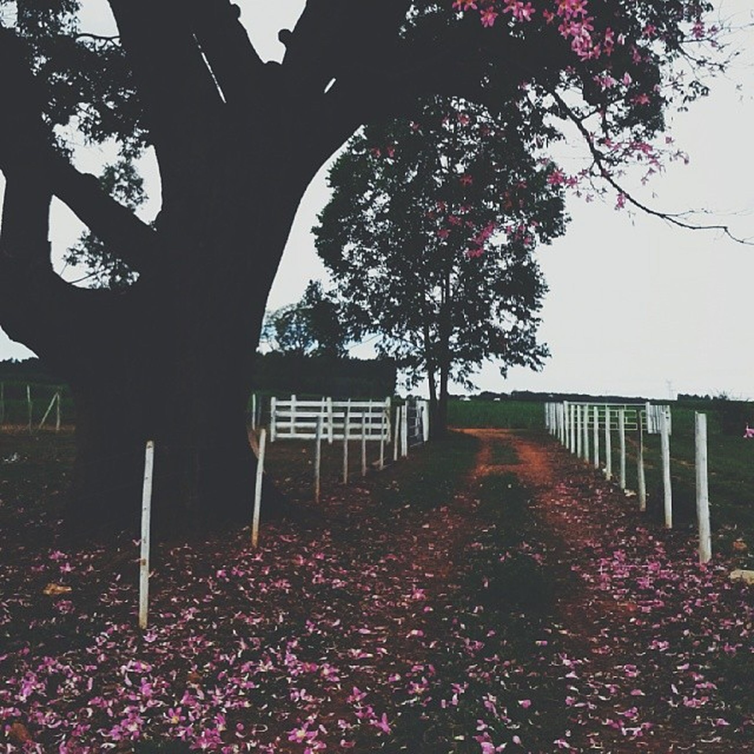 tree, flower, growth, beauty in nature, nature, branch, park - man made space, tranquility, pink color, tranquil scene, built structure, season, freshness, scenics, blossom, day, fence, outdoors, park, architecture