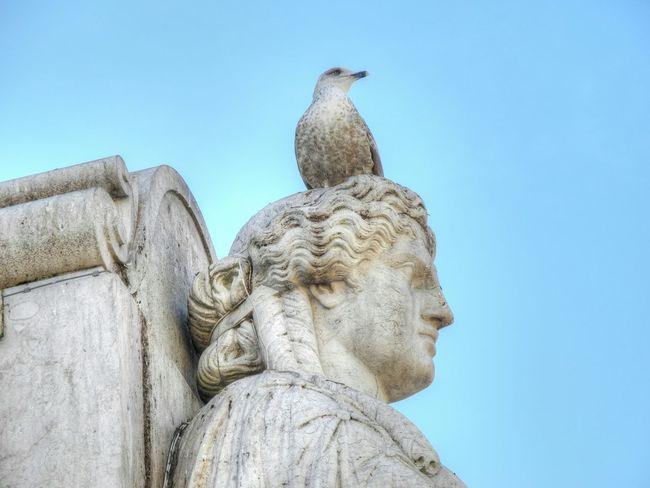 Möwe Statue Kopf