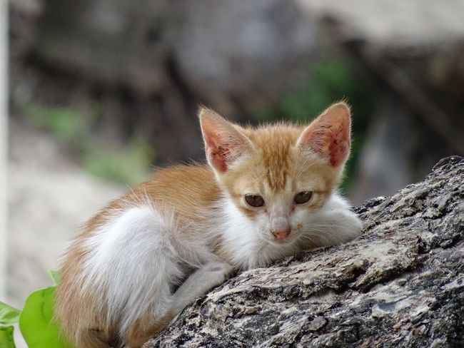 Alone Close-up Deserted Feline Kitten Kitty Pets Solace Solitude Young Animal