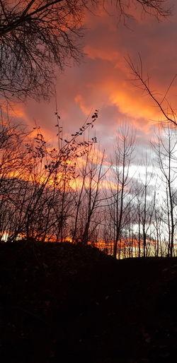 Silhouette bare trees on field against orange sky
