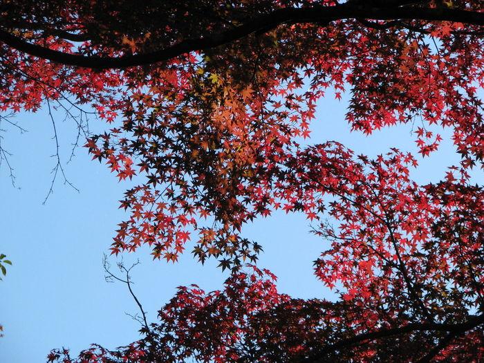 紅葉 Nature EyeEm Nature Lover Japan