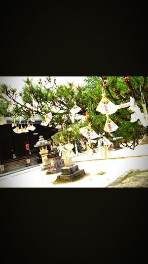 智恩寺 Sunny☀ Kyoto Beautiful ♥ Photographic Memory First Eyeem Photo Enjoying Kyoto Japan